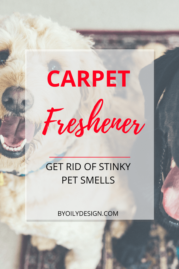 How To Remove Pet Odor From Carpet?