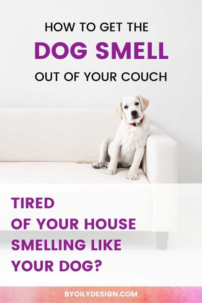 white Dog on a couch with the words how to get the dog smell out of your couch