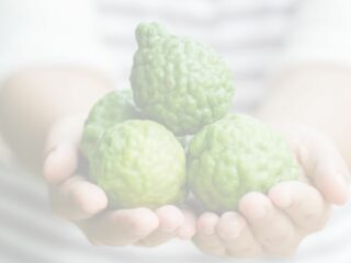 woman holding a handful of Bergamot